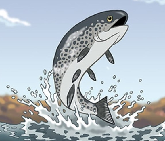 Jumping cartoon trout